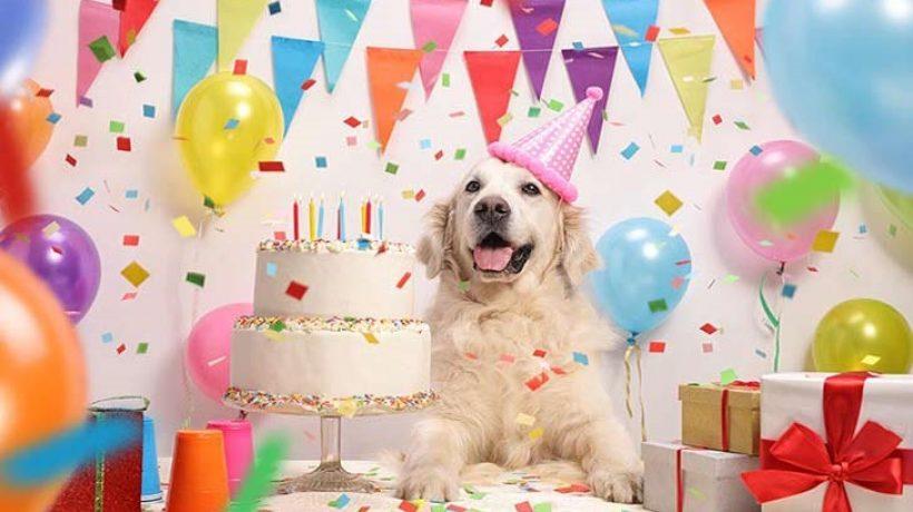 Happy birthday dear Lassie, happy birthday to you
