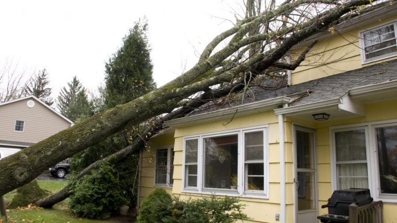 What To Do When the Tree Falls on You